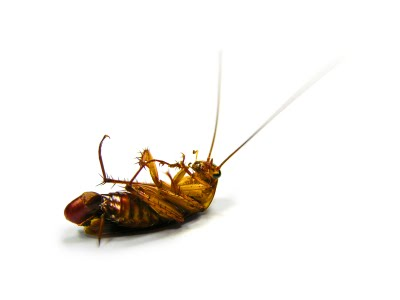 Заговор от тараканов