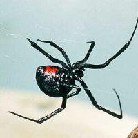 Примета паук ползет вверх