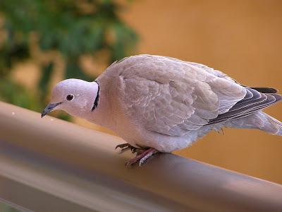 Примета если птица ударилась в окно