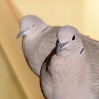 Птица залетела в окно примета