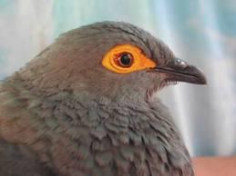 Залетела птица на балкон примета