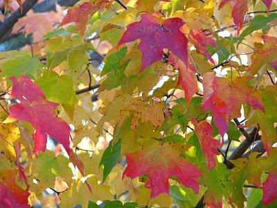 Народные приметы о осени