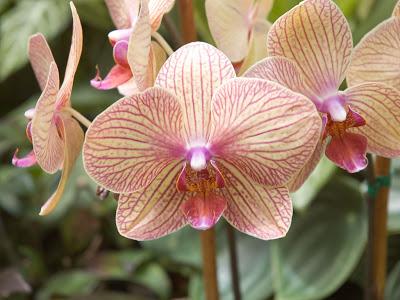 Орхидея дома - приметы