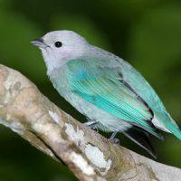 Примета - птичка накакала