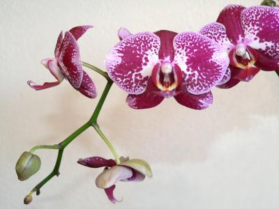 Приметы про орхидею
