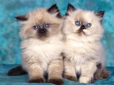 Приметы про котов