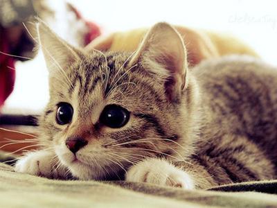 Рыжий кот в доме - приметы