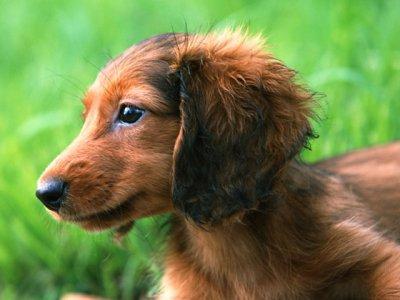Если сбил собаку: приметы