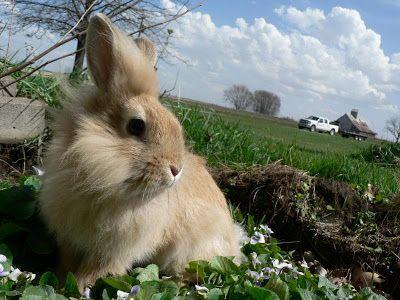 Кролик в паре не конфликтен