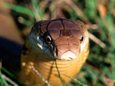 Змея очень стабильна