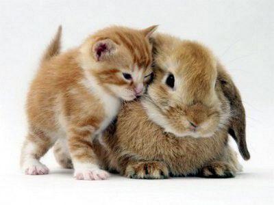 Кролики очень мягкие в отношениях