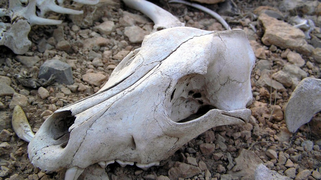 Plot on the bones: from the bone