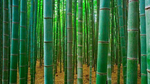Бамбук является символом двойки в деревьях