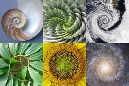 В каждом природном явлении присутствует свое золотое соотношение чисел