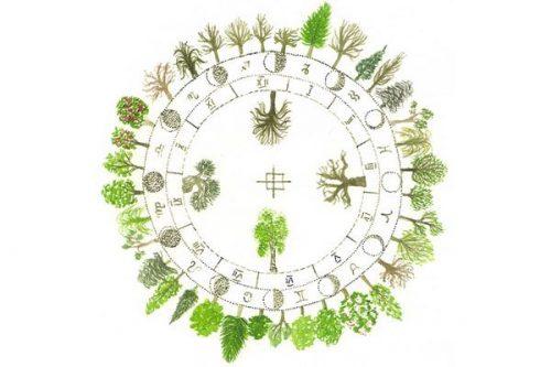 Выберите своё дерево с гороскопом друидов
