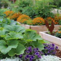 Защита огорода от сглаза соседей
