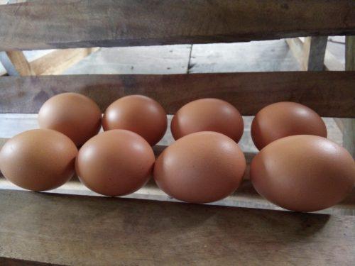 Яйцо может помочь при порче