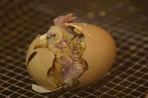 снятие порчи яйцом по фото