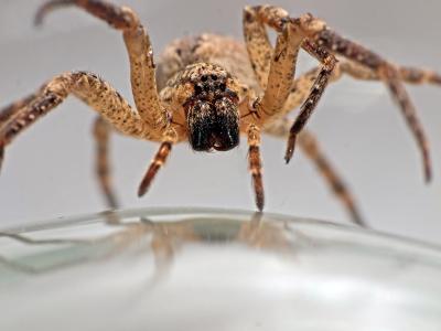 Увидеть паука вечером примета
