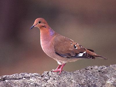 Примета птица села на подоконник