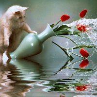 Примета - смерть кошки