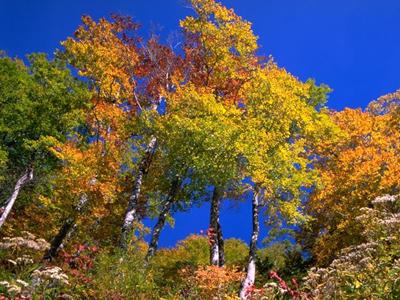 Народные приметы на погоду в сентябре