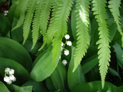 Оберег цветок папоротника и его значение