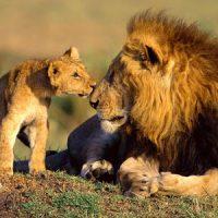 Какой камень подходит львам