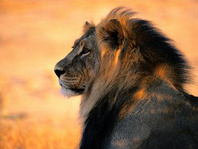 Камень-талисман льва