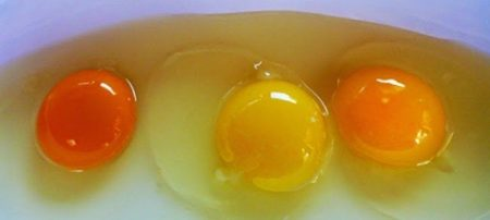 Болезнь можно перевести на куриные яйца