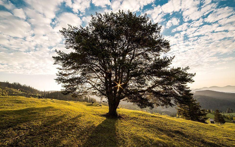 Необходимо найти сухое дерево