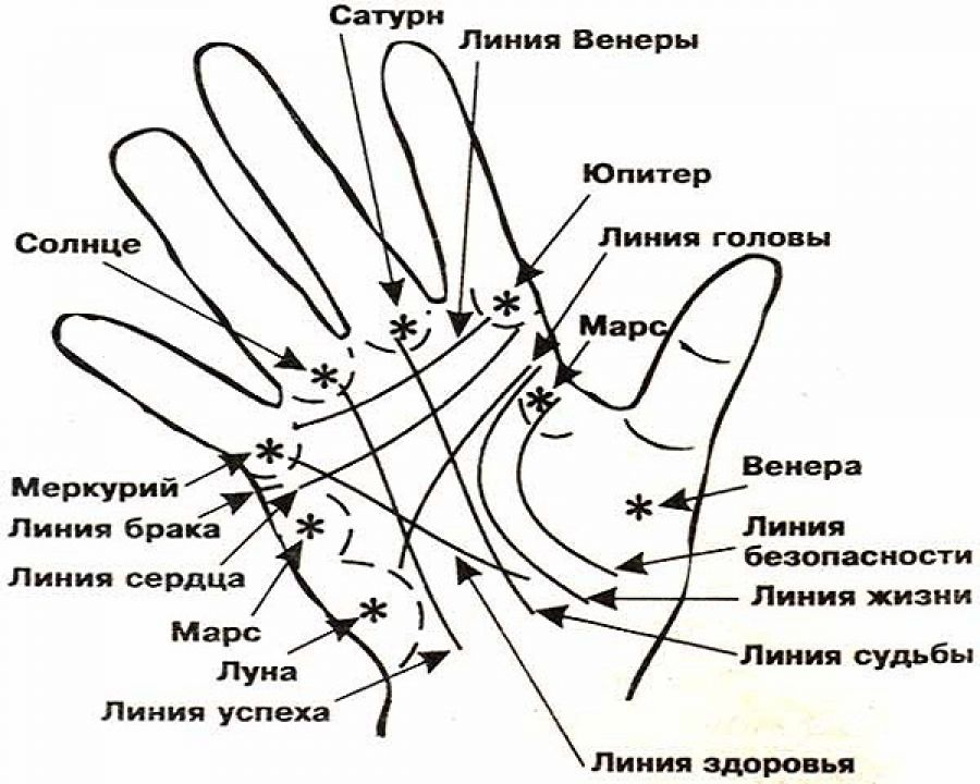 Линия головы рассказывает о характере человека